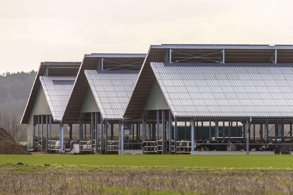 Three giant metal buildings, steel barns being used for cows. Metal buildings are examples of prefab metal horse barns.